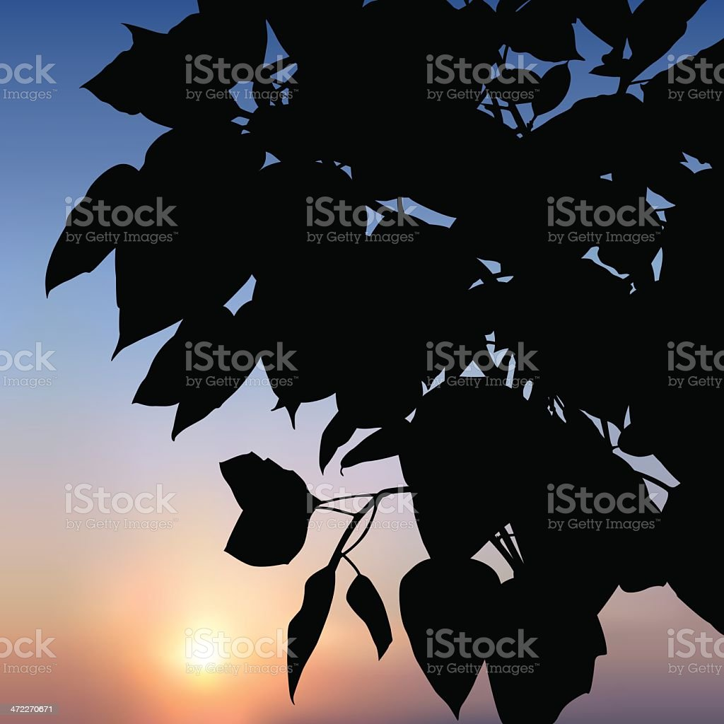 Silhouette of Leaves At dawn (vector) vector art illustration