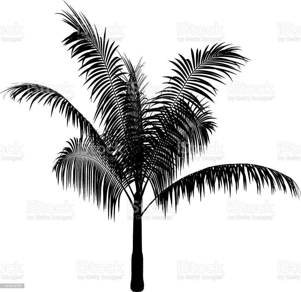 Silhouette of little palm tree vector art illustration