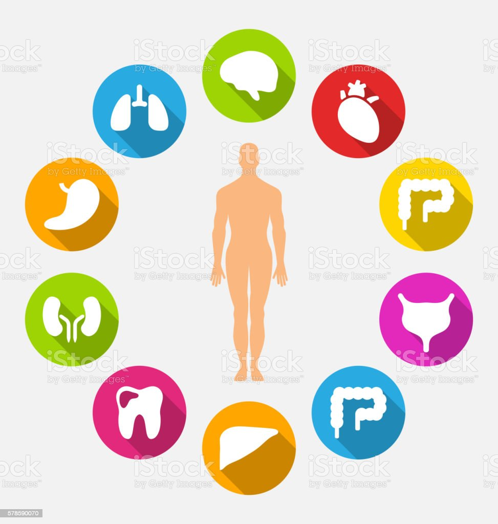 Silhouette of Male and Internal Human Organs vector art illustration