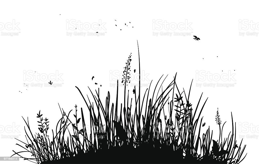 Silhouette of tall grass and bugs on white royalty-free stock vector art