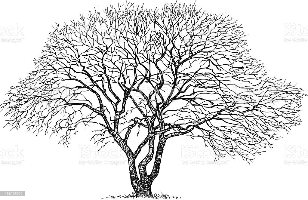 silhouette of the old tree vector art illustration
