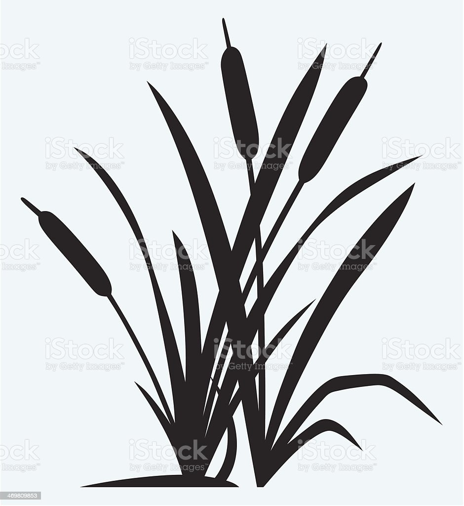 Silhouette reed vector art illustration