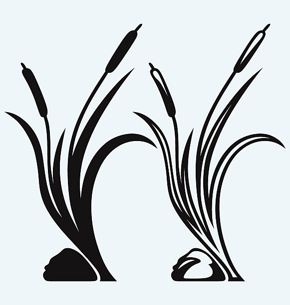 Cattail Clip Art, Vector Images & Illustrations - iStock