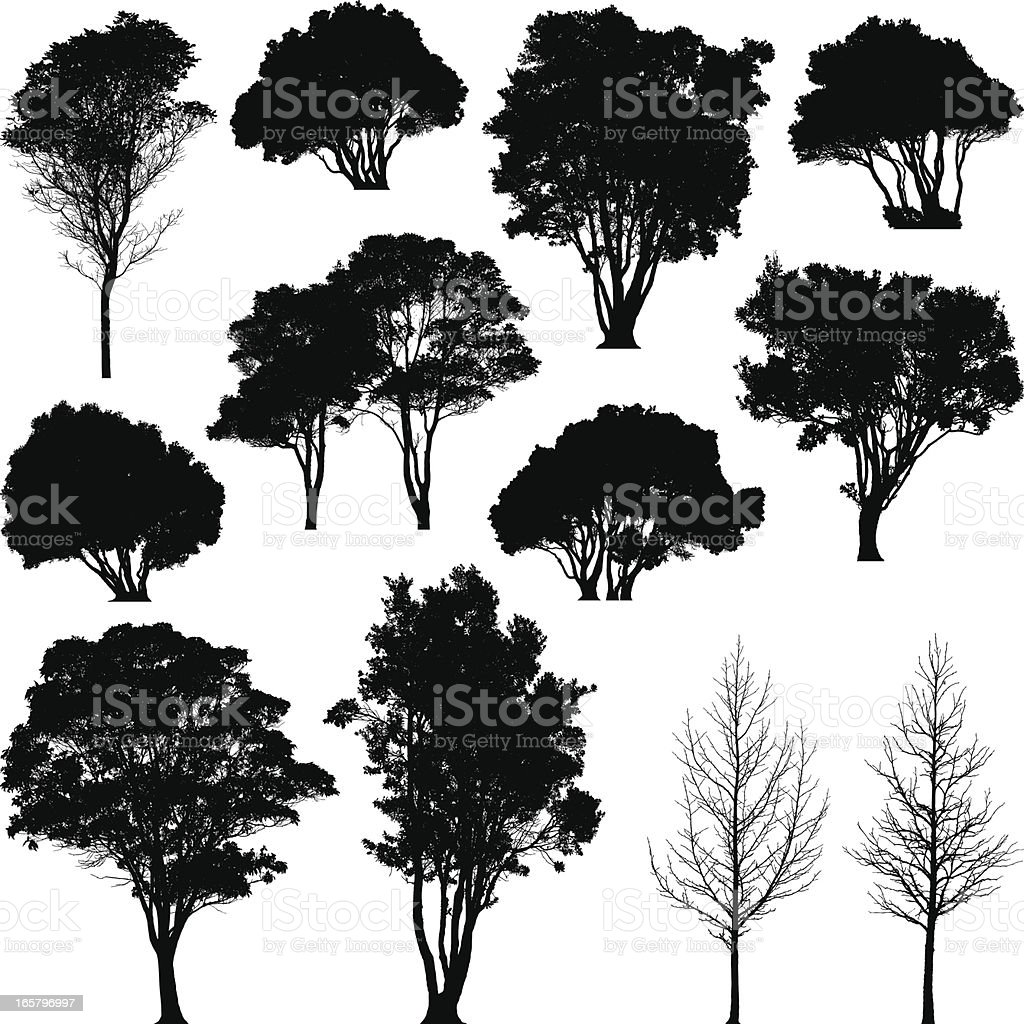Silhouetted trees vector art illustration