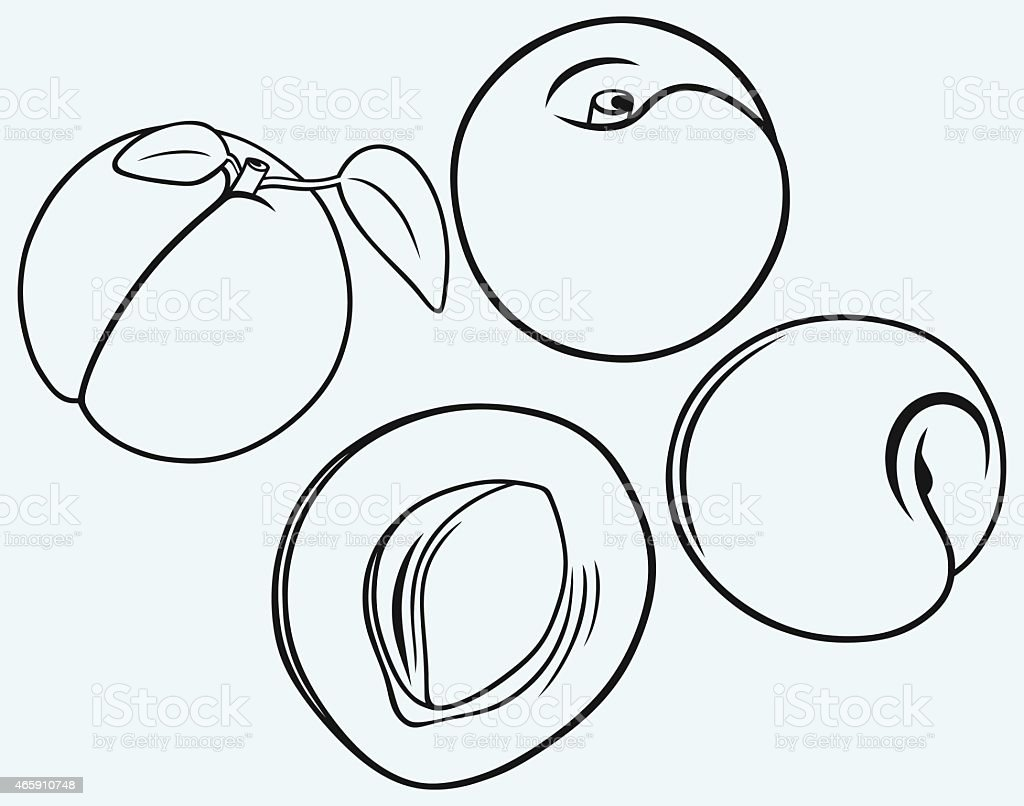 Apricot Clip Art, Vector Images & Illustrations