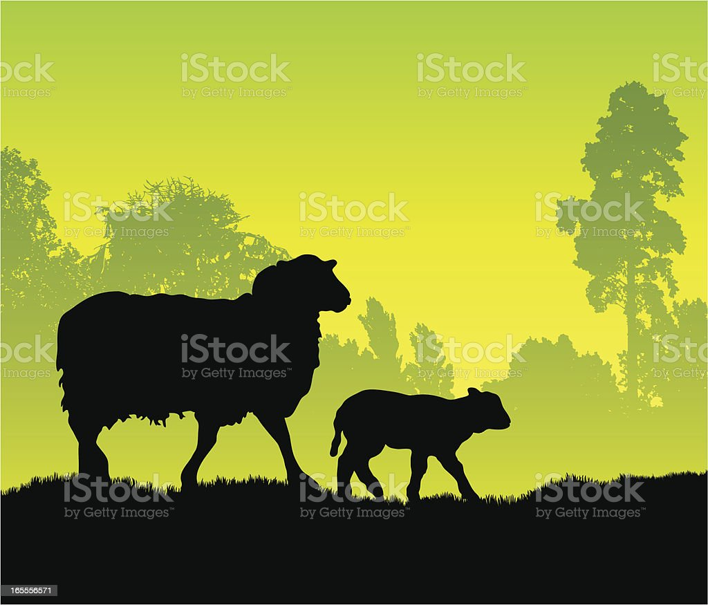 Silhouettes of a sheep and lamb walking through a field royalty-free stock vector art