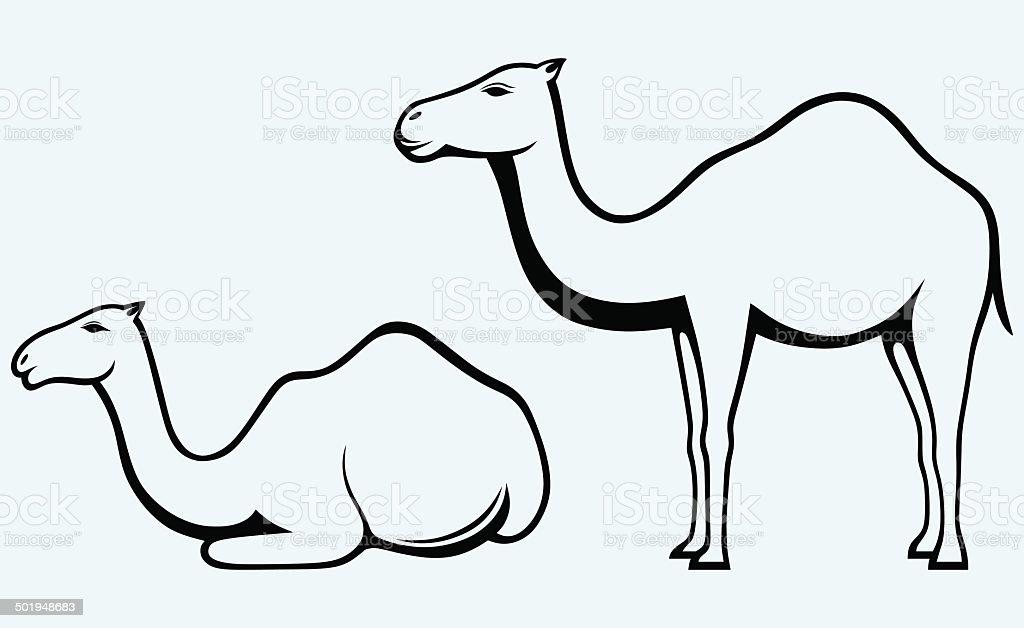 Silhouettes of camel vector art illustration