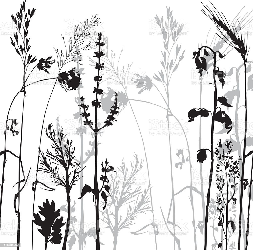 Silhouettes of flowers and grass vector art illustration