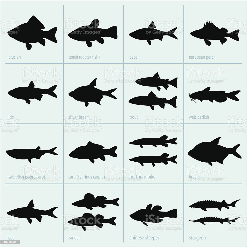 Silhouettes of fresh water fish vector art illustration