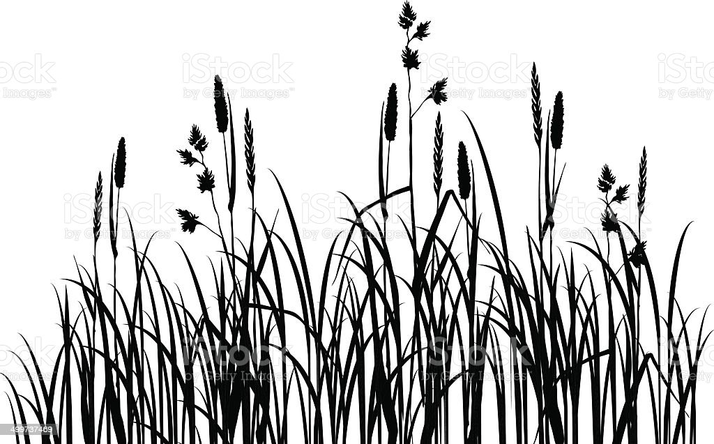 Silhouettes of grass vector art illustration