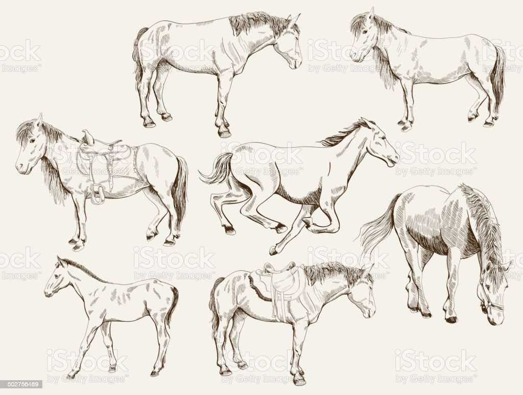 silhouettes of horses vector art illustration
