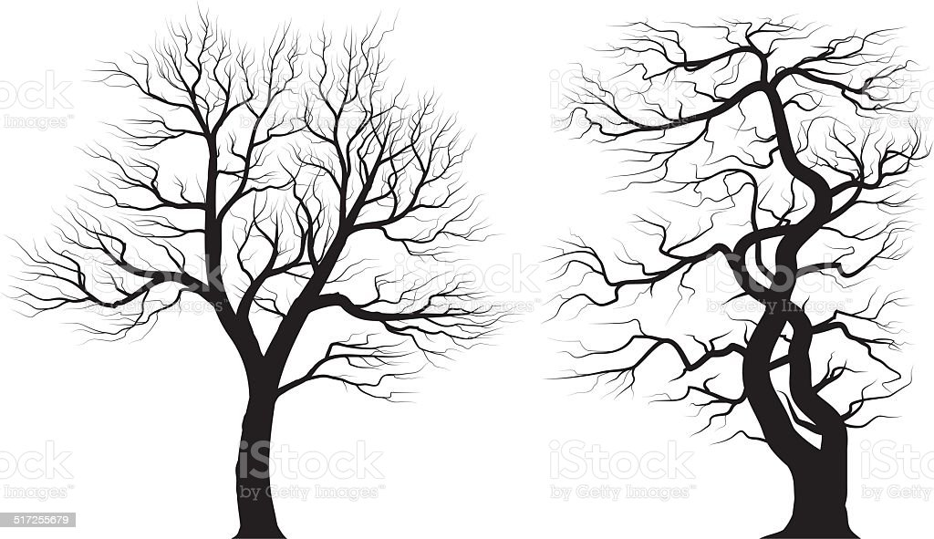 Silhouettes of old huge trees over white background. vector art illustration