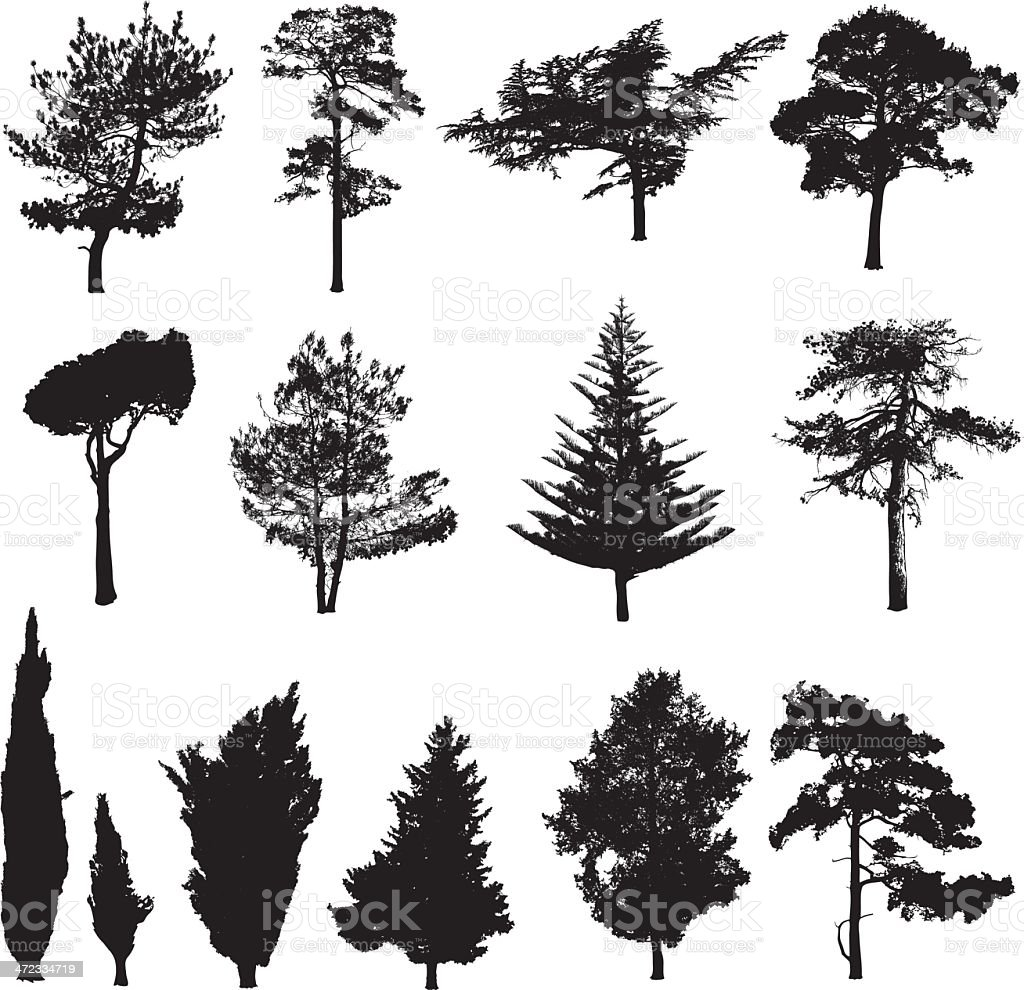 Silhouettes of pines vector art illustration
