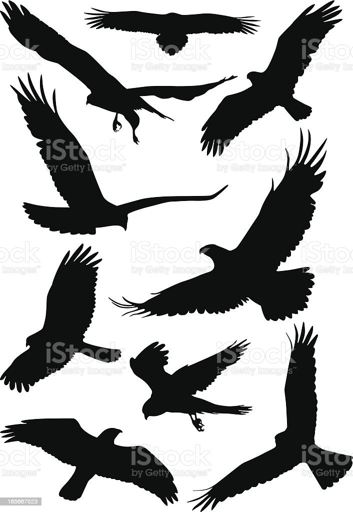 Silhouettes of wild birds in flight vector art illustration