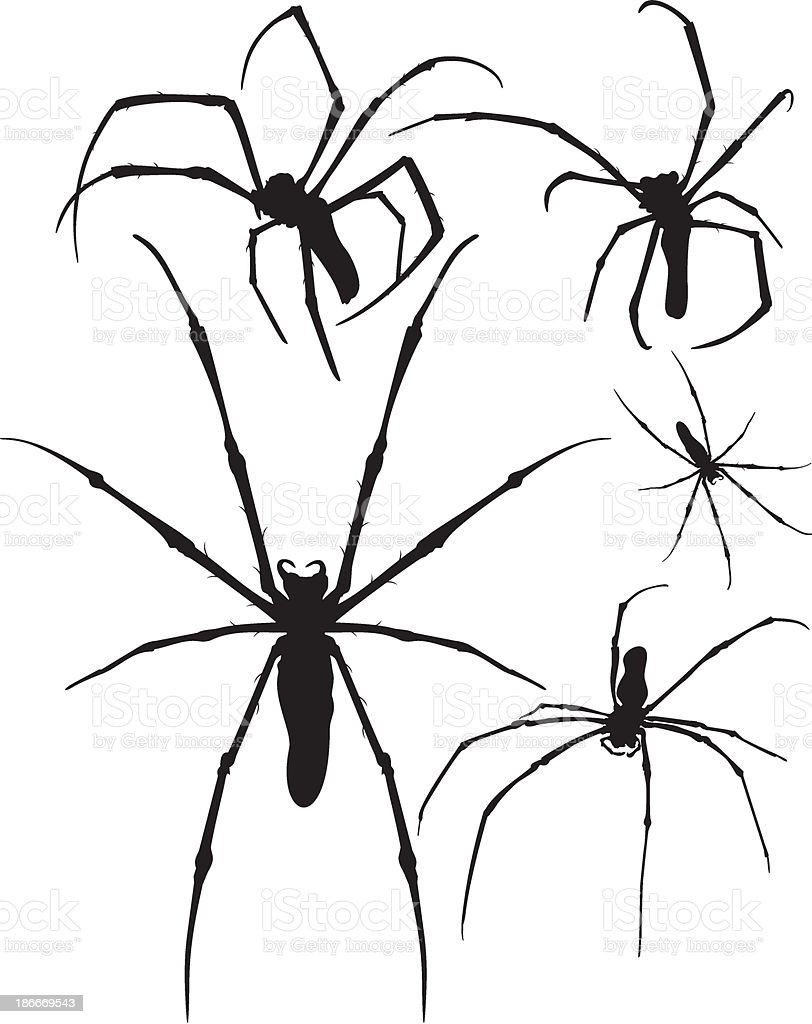 silhouettes spider vector royalty-free stock vector art