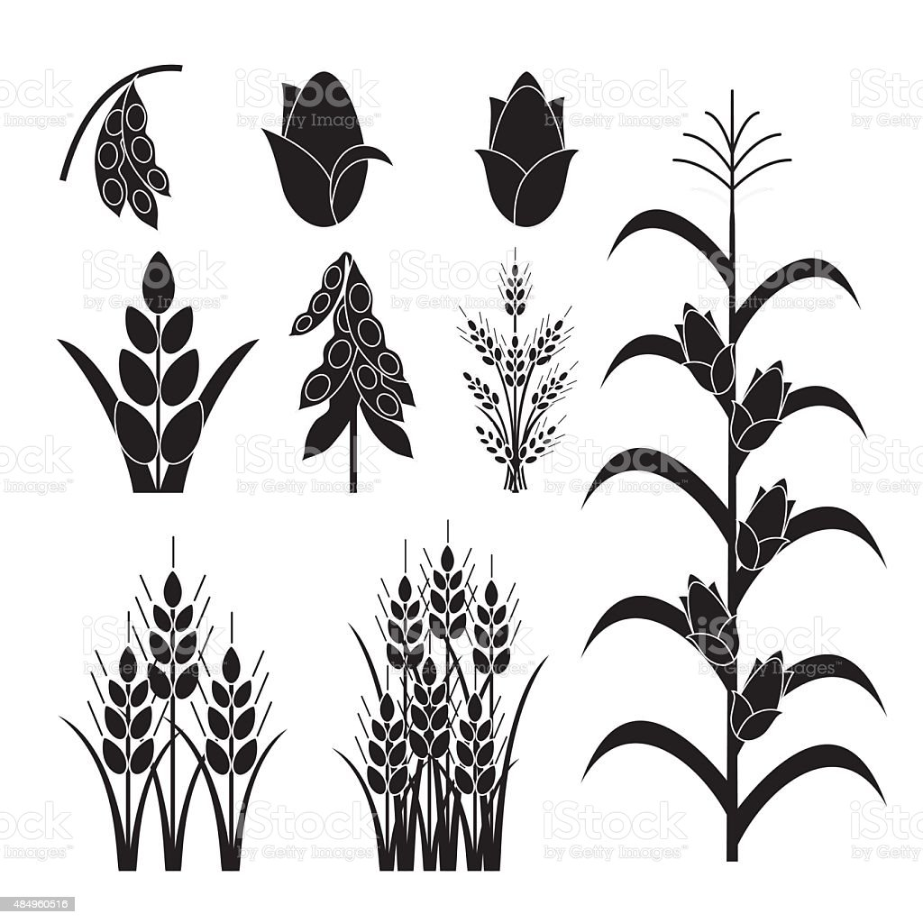 Simple Agricultural Crops Icons vector art illustration