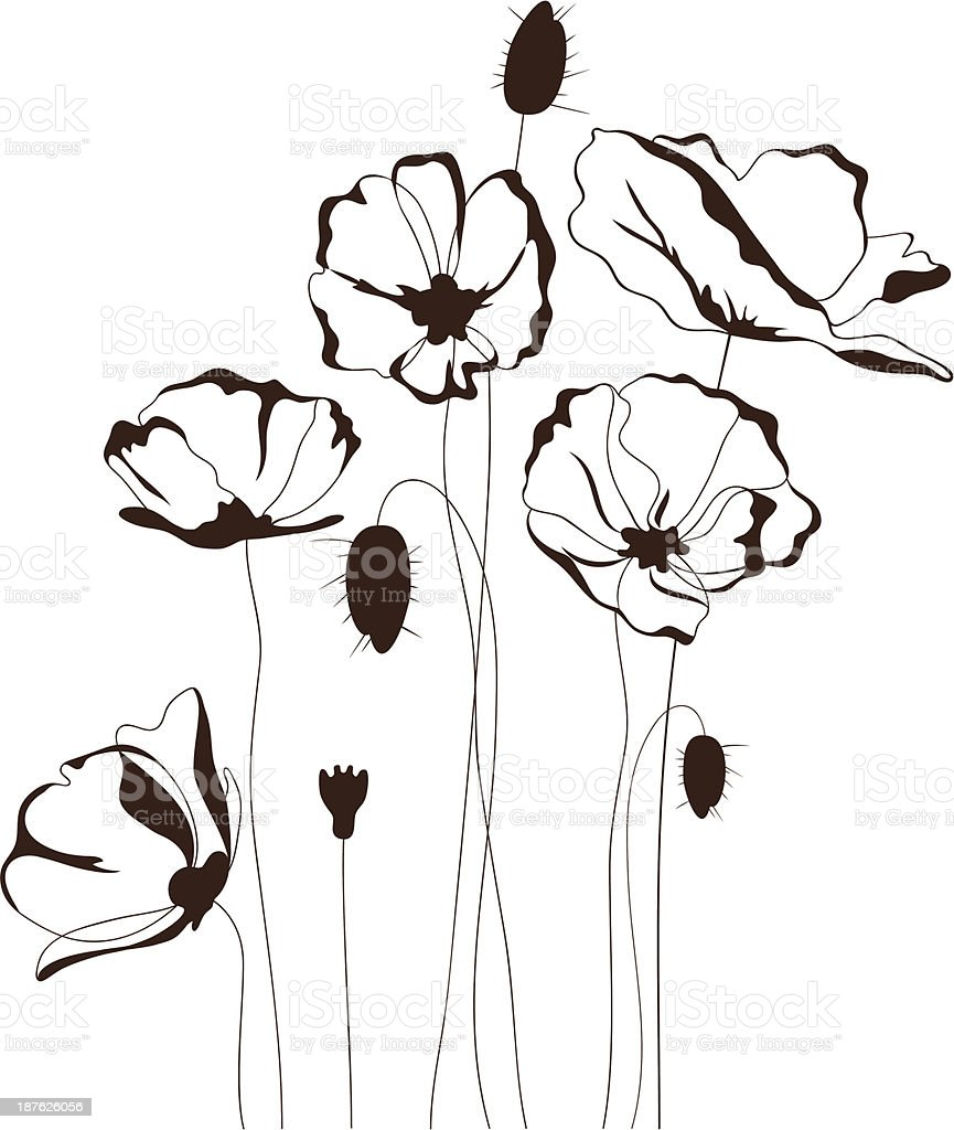 A simple drawing of poppies on a white background vector art illustration