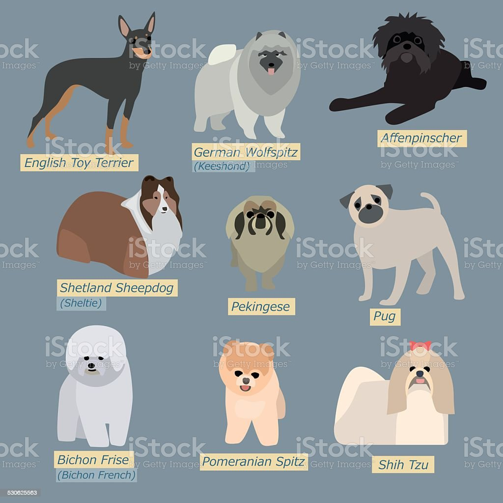 Simple silhouettes of dogs. Types of mini-dogs in flat design vector art illustration
