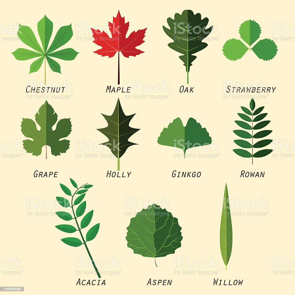 Simple silhouettes of leaves with names of plants vector art illustration