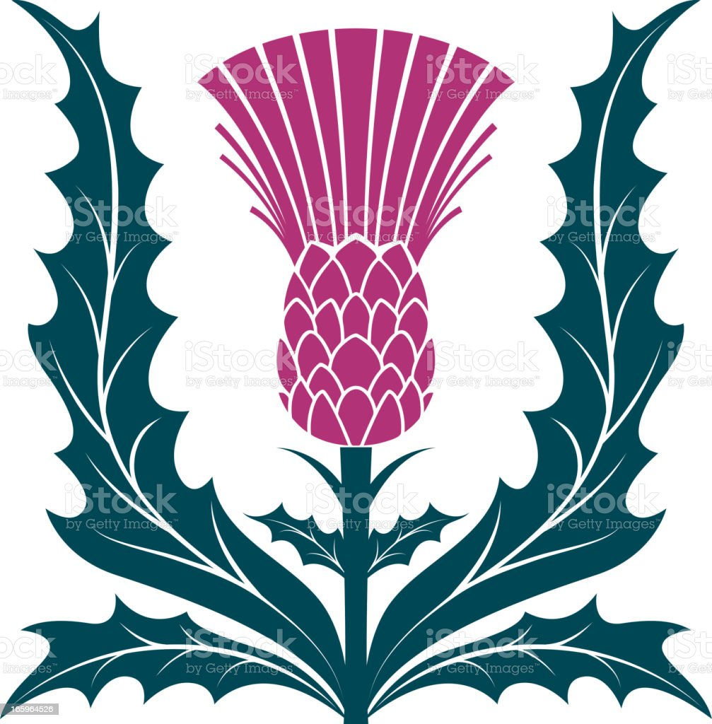 Simple Stencil Style Scottish Thistle Vector Illustraion Isolated on White royalty-free stock vector art