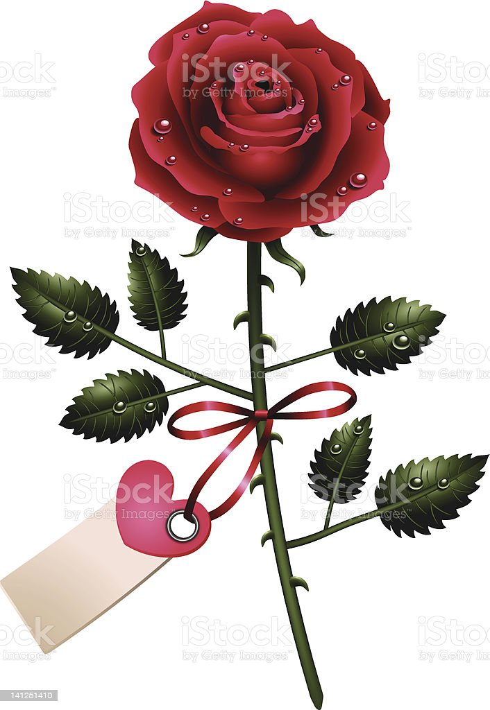 Single red rose with label royalty-free stock photo