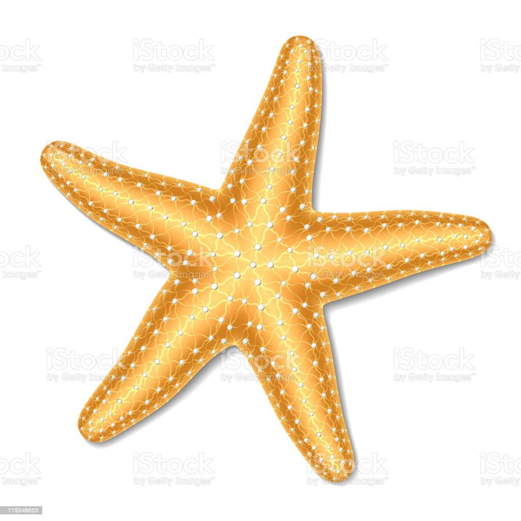 A singular gold starfish on white vector art illustration