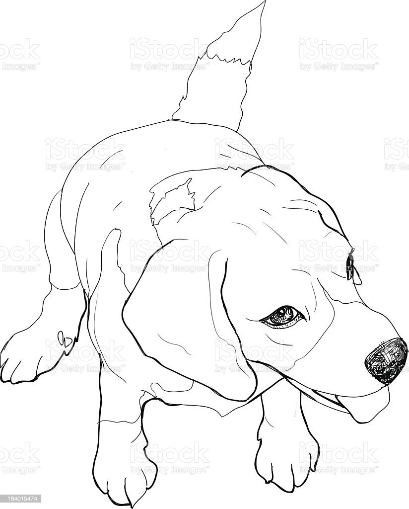 Sitting Beagle royalty-free stock vector art