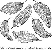 six different hand drawn vector banana leaves, isolated on white