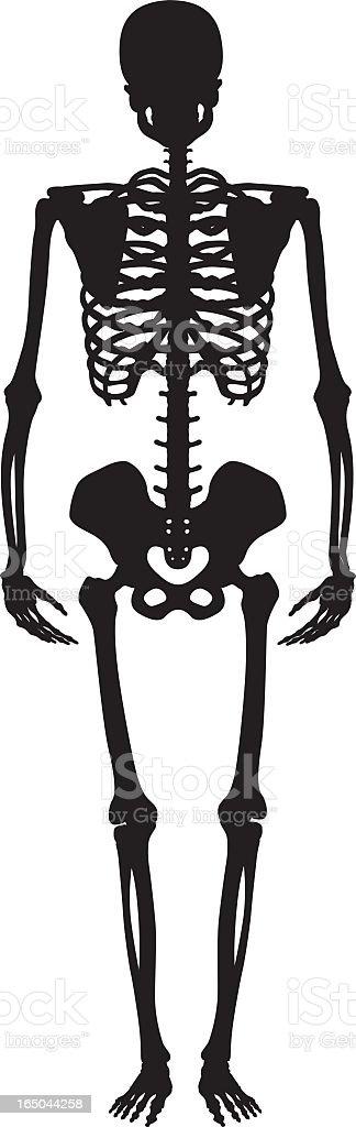 Skeleton silhouette on a white background vector art illustration