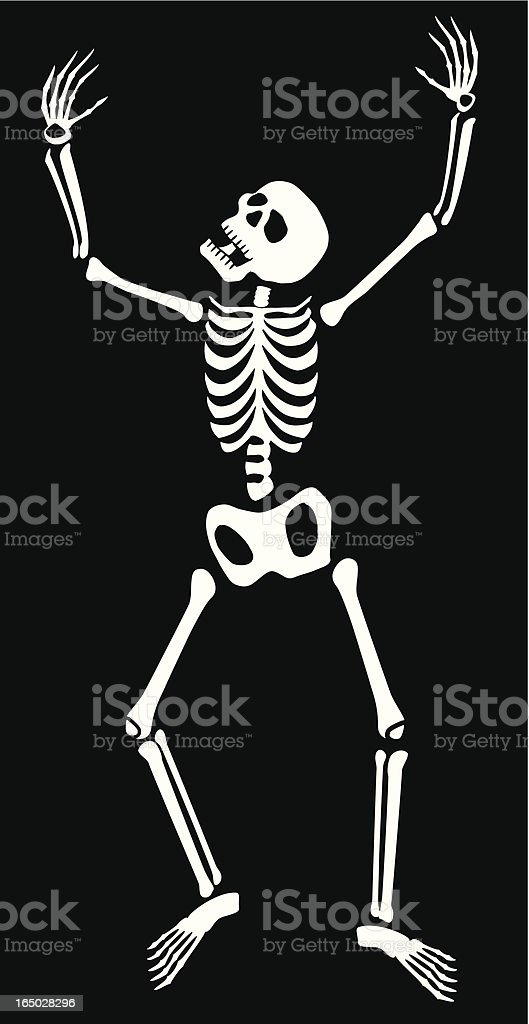 Skeleton vector art illustration