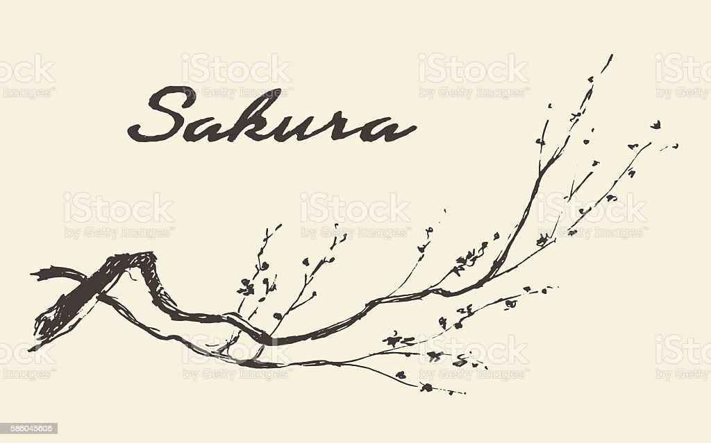 Sketch branch sakura flowers vector illustration. vector art illustration