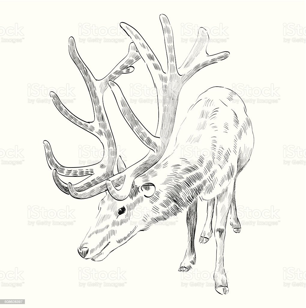Sketch deer vector art illustration