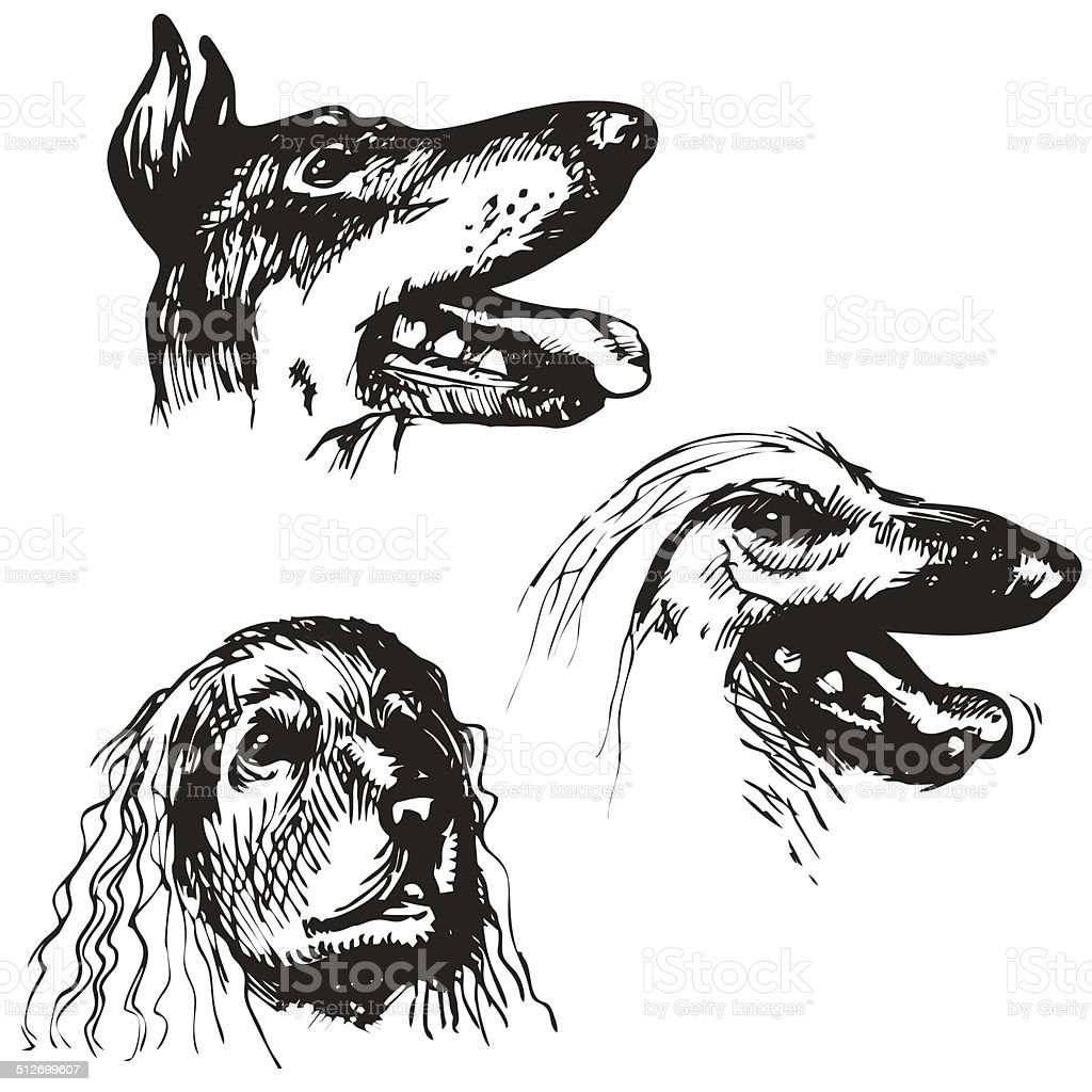 Sketch Dog Set vector art illustration