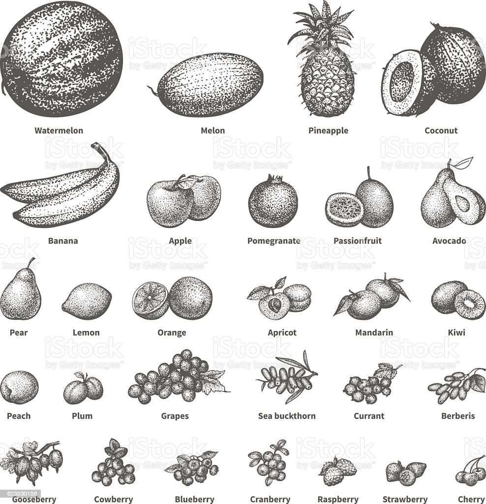 Sketch doodle hand-drawn set fruit vector art illustration