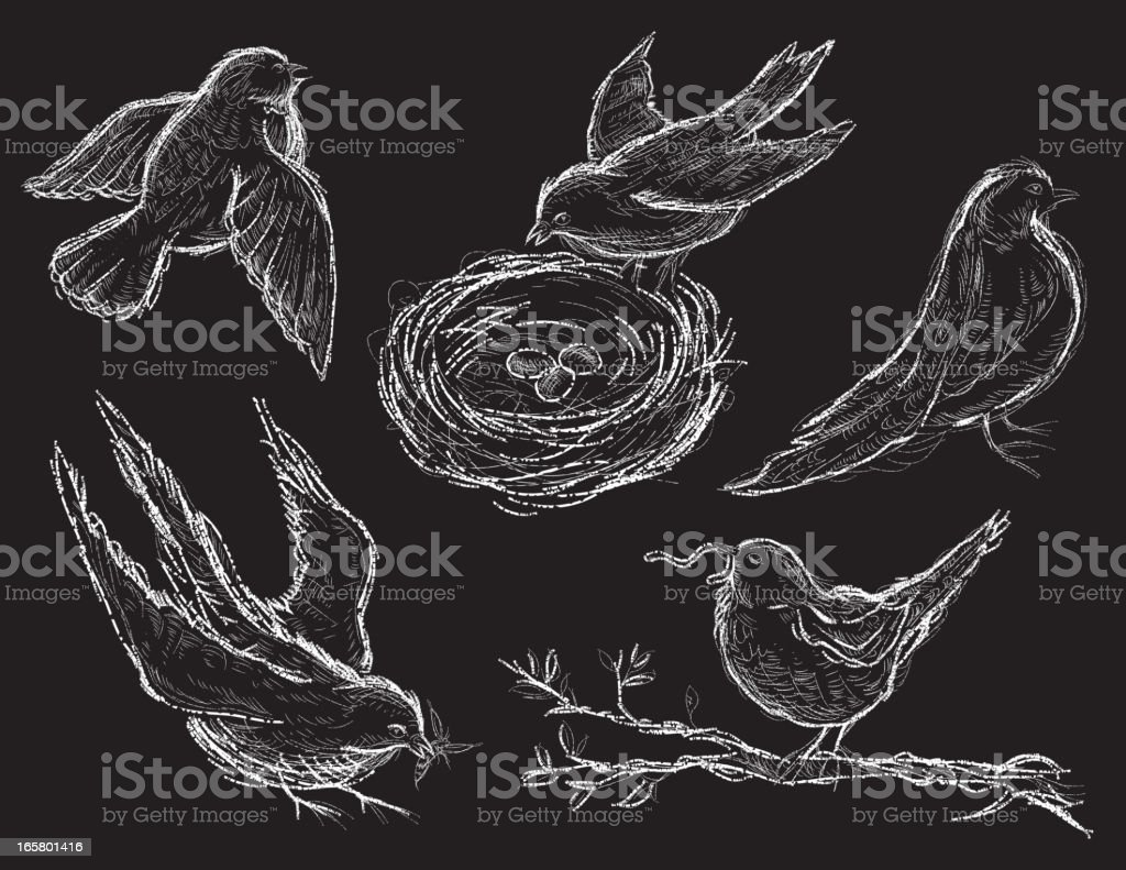 Sketch drawing variety set of birds royalty-free stock vector art