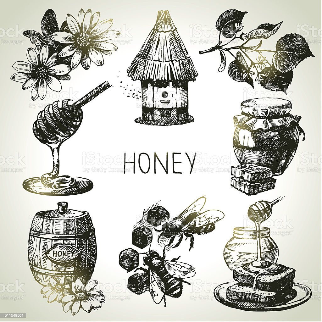 Sketch honey set vector art illustration