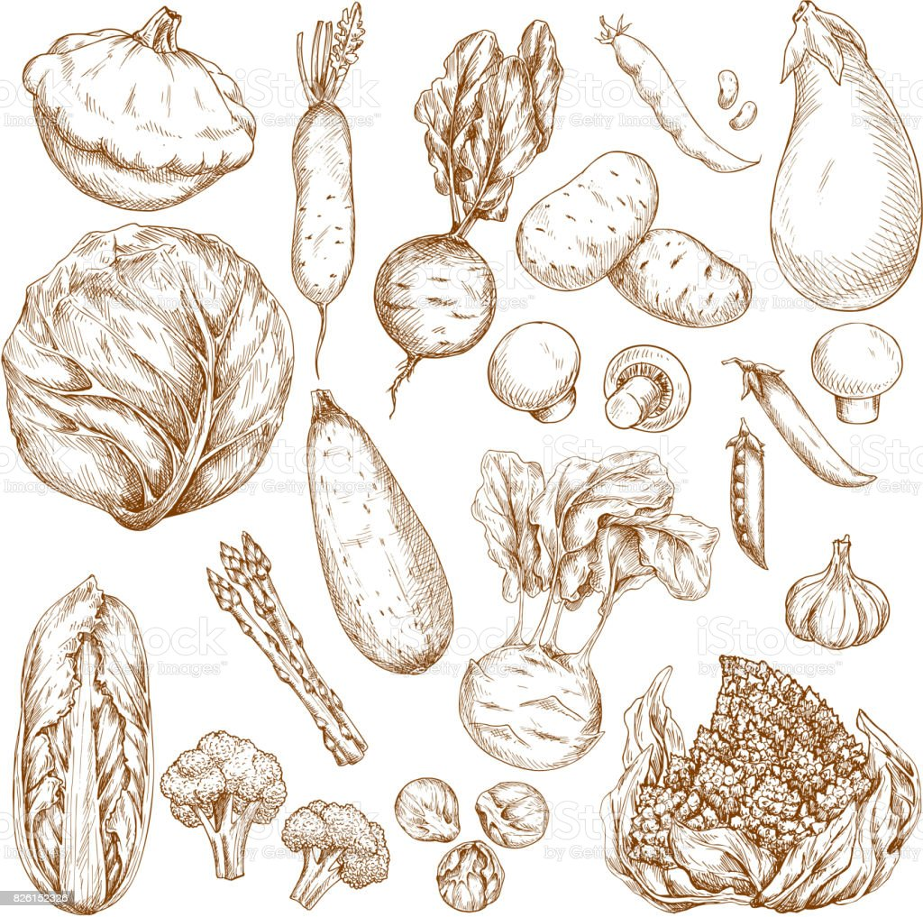 Sketch isolated vegetables vector icons set vector art illustration