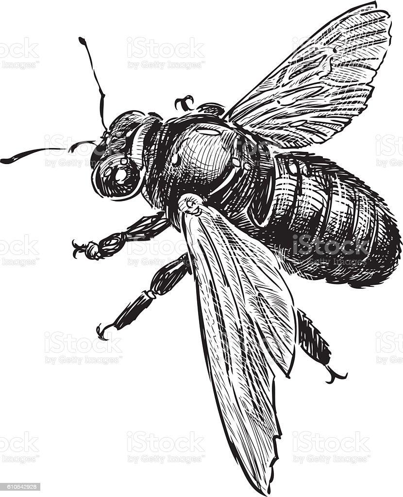 sketch of a bumblebee vector art illustration