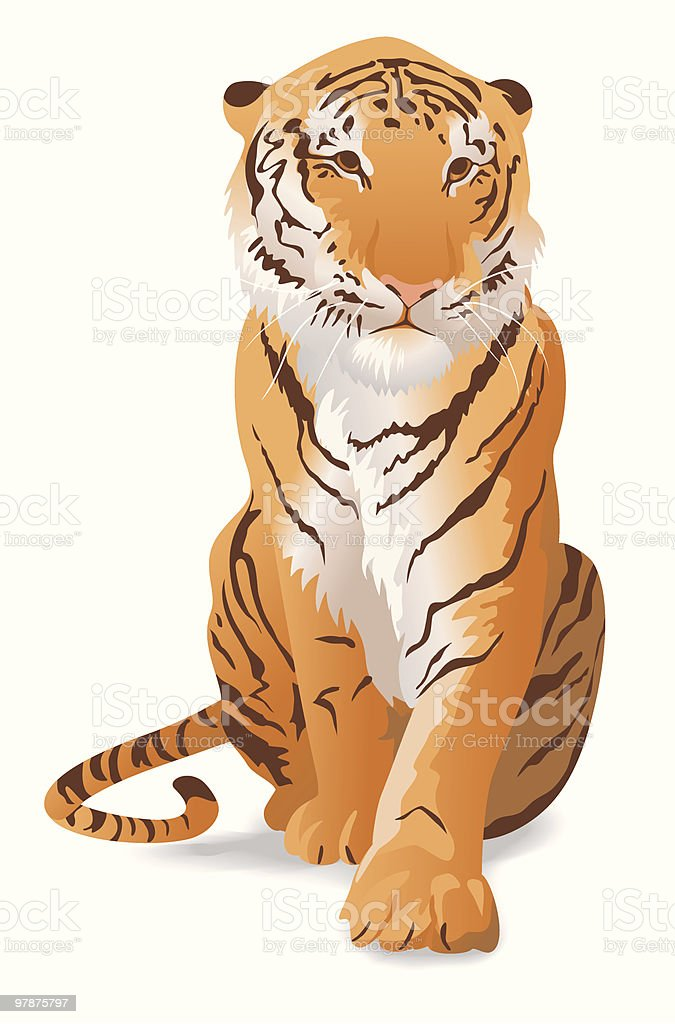 A sketch of a large tiger on a white background royalty-free stock vector art