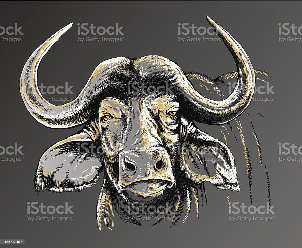 Sketch of an African Buffalo's face vector art illustration