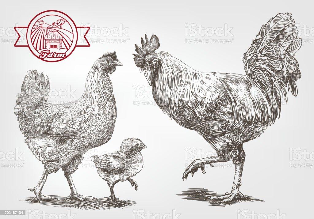 Sketch of brood-hen vector art illustration
