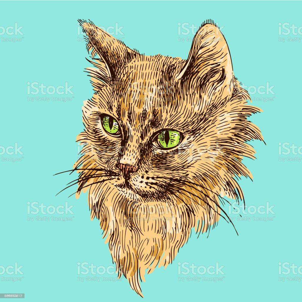 sketch of cat vector art illustration