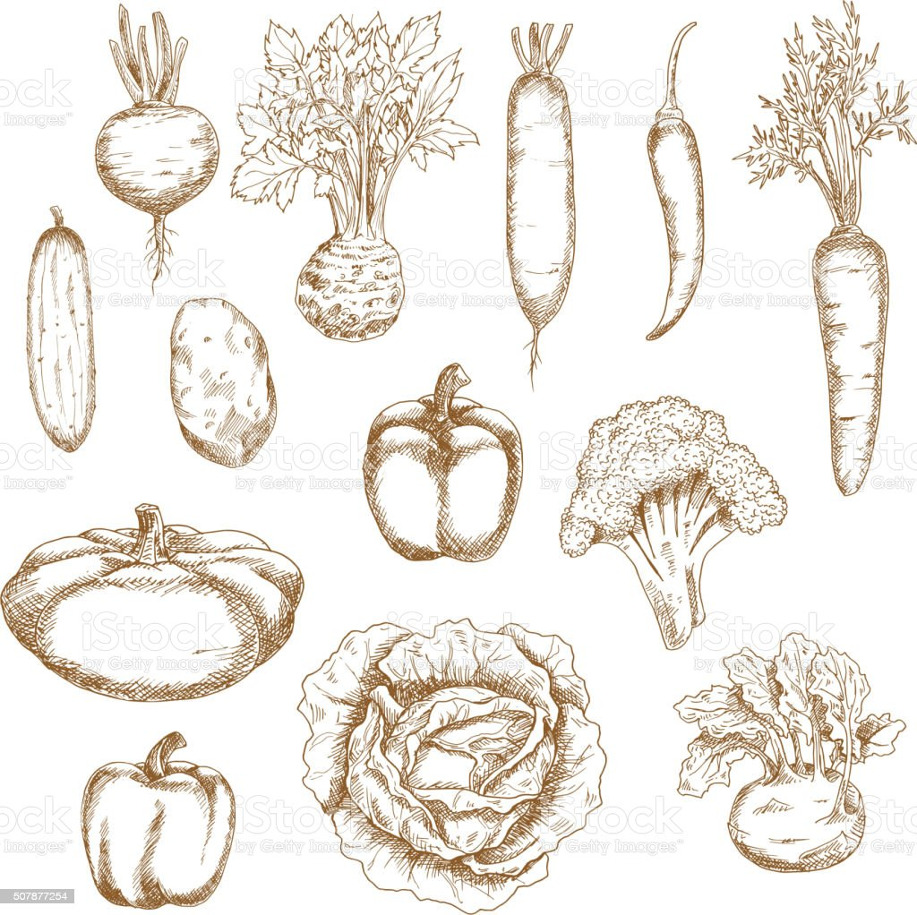 Sketch of healthy organic vegetables icons vector art illustration