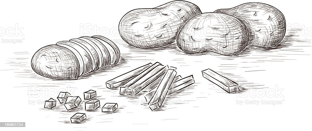 Sketch of potatoes in different forms vector art illustration