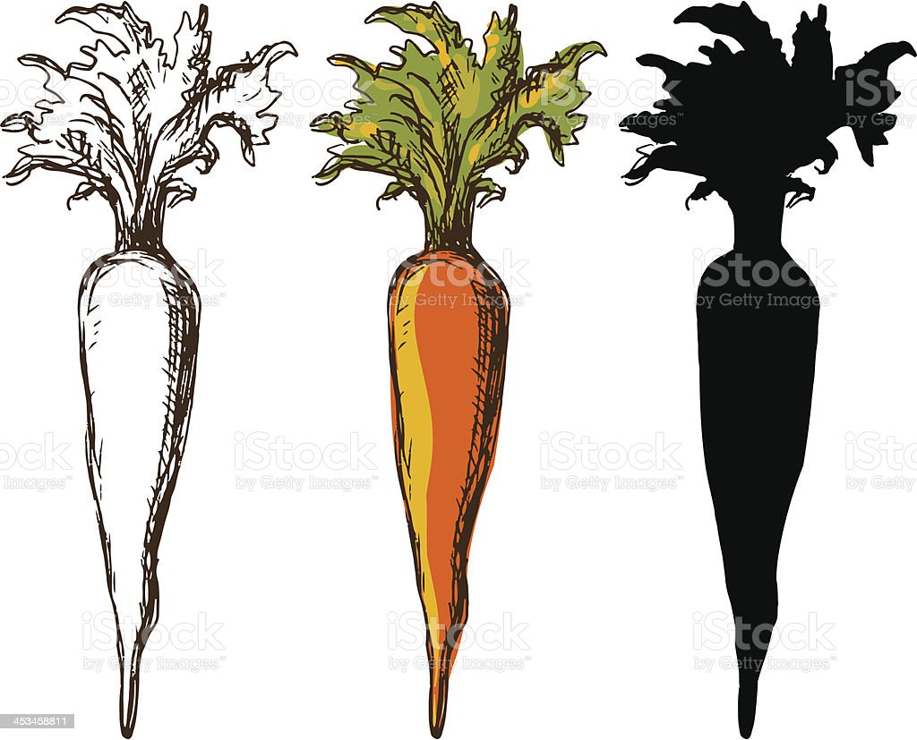 Sketch of three carrots in white, color, and black vector art illustration