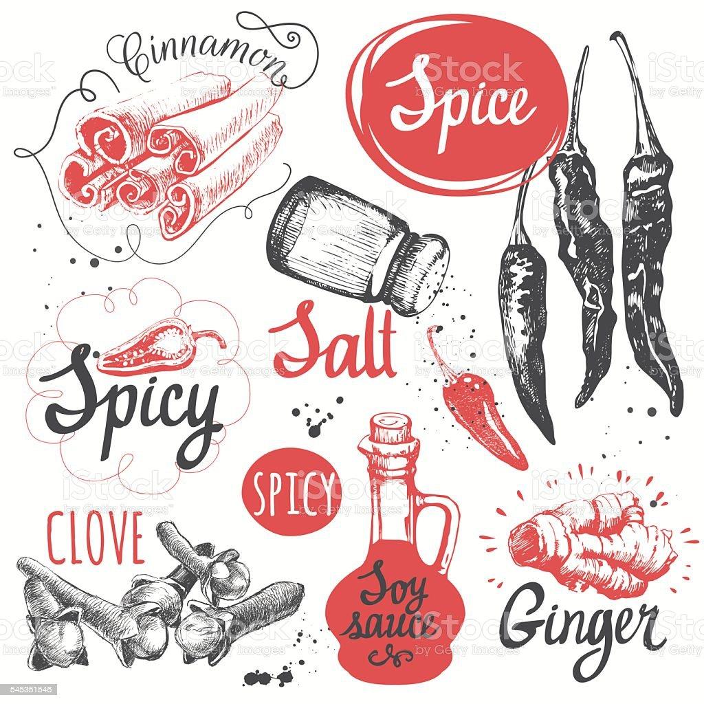 Sketch set with soy sauce, cloves, salt, pepper, cinnamon. vector art illustration