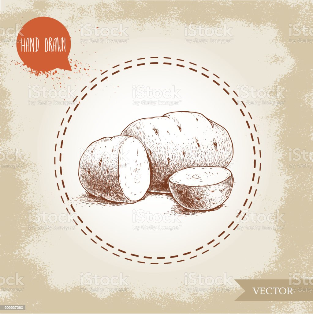 Sketch style illustration of ripe potatoesand slices vector art illustration