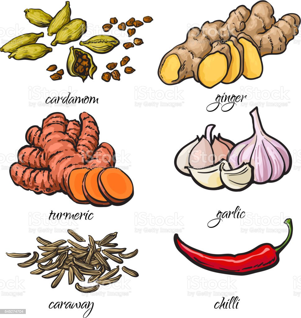 Sketch style spices - garlic, ginger, turmeric, cardamom, chili, caraway vector art illustration