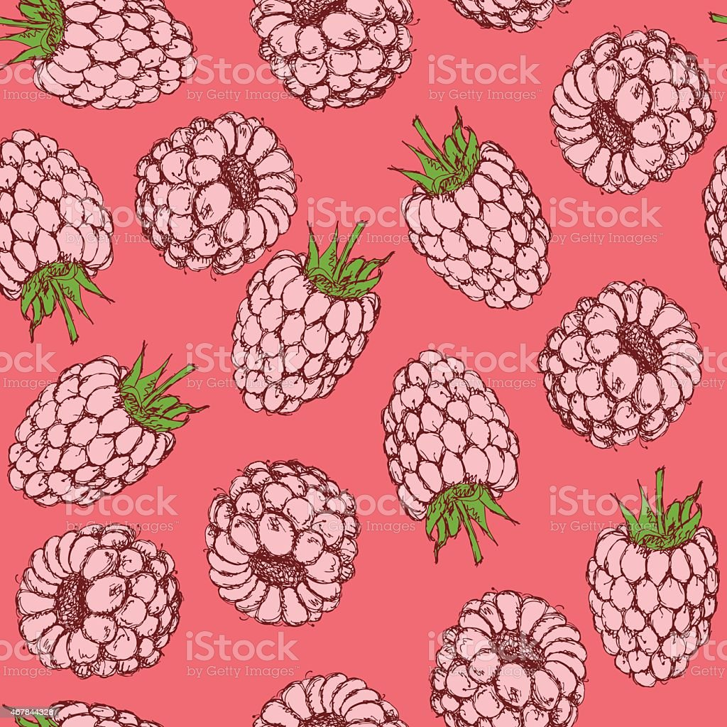 Sketch tasty raspberry in vintage style vector art illustration