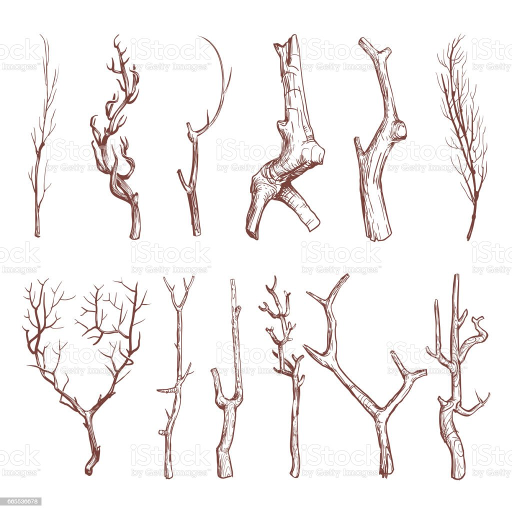 Sketch wood twigs, broken tree branches vector set vector art illustration